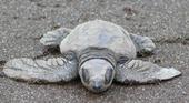 The Weekend Leader - Turn to turtle