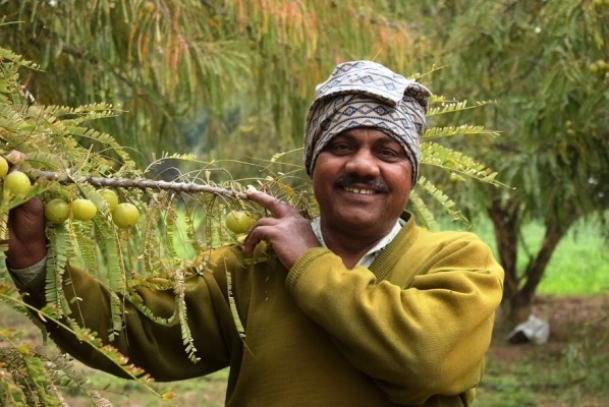 with amla cultivation, he is making money grow on trees