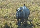 Rhino Vision