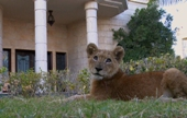 The Weekend Leader - Wild animals like lions, tigers and cheetahs as pets in UAE, Dubai