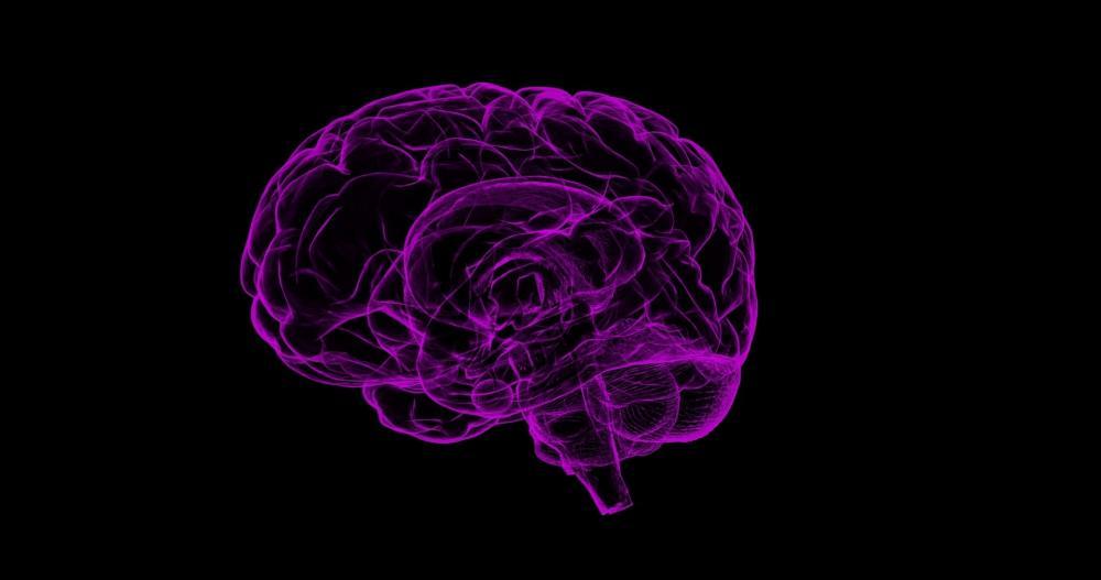 The Weekend Leader - Indian scientist develops human model to study brain disorders