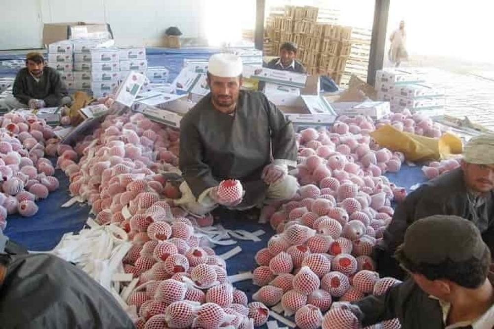 The Weekend Leader - Afghan poppy trade zooms despite stranded fruit exports
