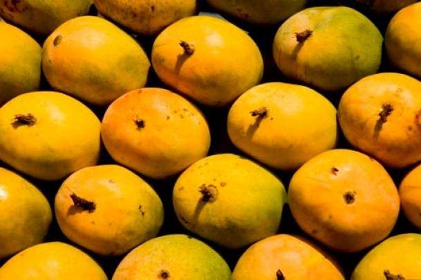 Mango makes it