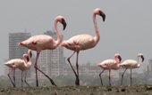 Safety for flamingos