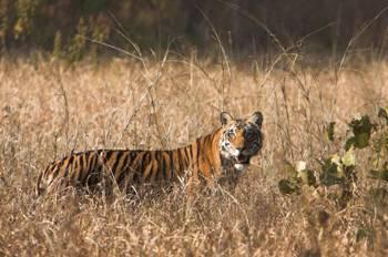 The Weekend Leader - Tiger's den