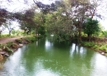 Lower Bhavani Project canal now irrigates land and recharges ground water