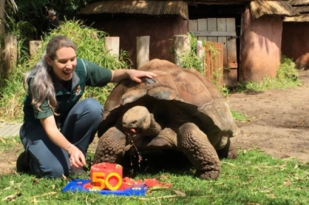 Giant tortoise Cerro celebrates 50th birthday in Perth Zoo