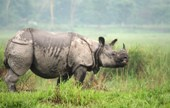Indian rhinos facing threat of extinction: Experts