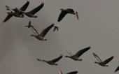 Harbouring birds