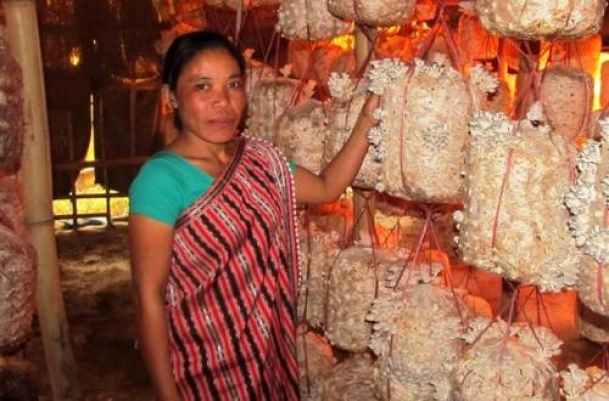 The Weekend Leader - Assam's countryside mushrooms with opportunities for women to find alternative farming | Nature | Guwahati