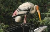 Guests at Zoo