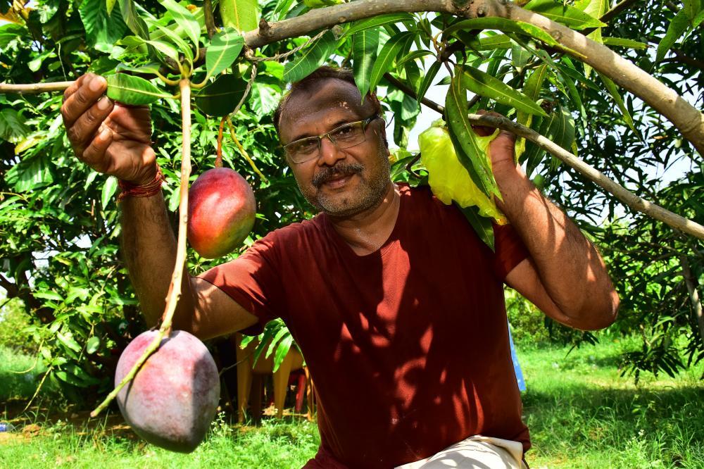 The Weekend Leader - Sankalp Singh Parihar, Jabalpur Miyazaki Mango Farmer Story