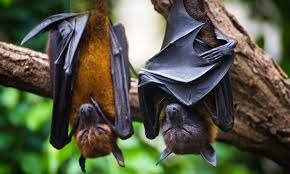 The Weekend Leader - Bat-related coronaviruses more frequent than thought: Study