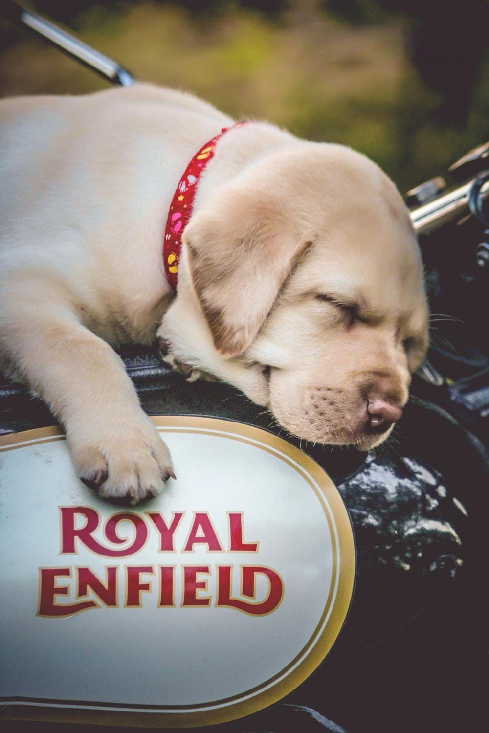 The Weekend Leader - Eicher Motors now offers customised Royal Enfield motorcycles