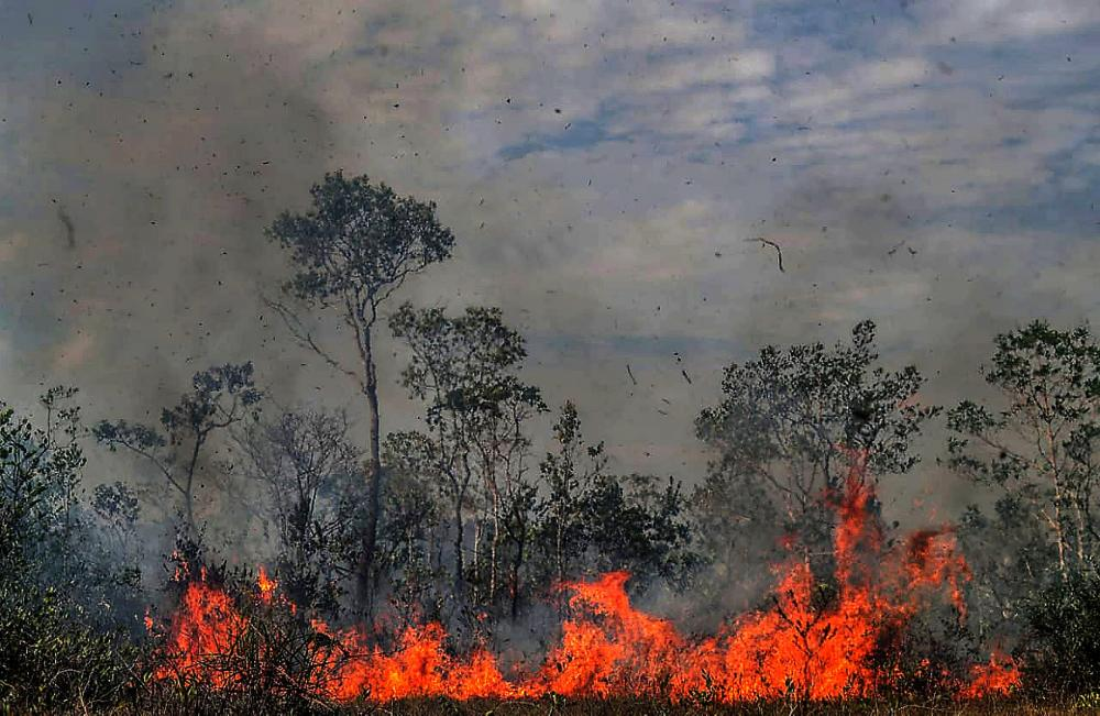 The Weekend Leader - Sao Paolo forest fires up 109% in 2020