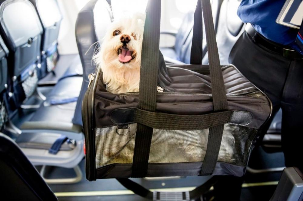 The Weekend Leader - Furry Companion: Man books Air India business class cabin for pet dog