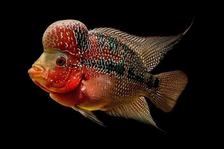 B'luru airport handles 24K ornamental fish from Thailand