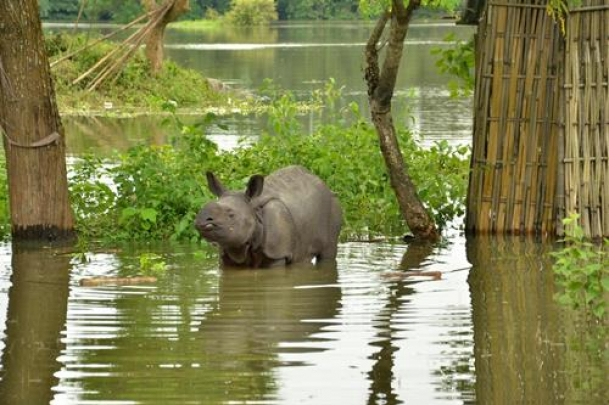 Over 17 lakh affected by Assam floods
