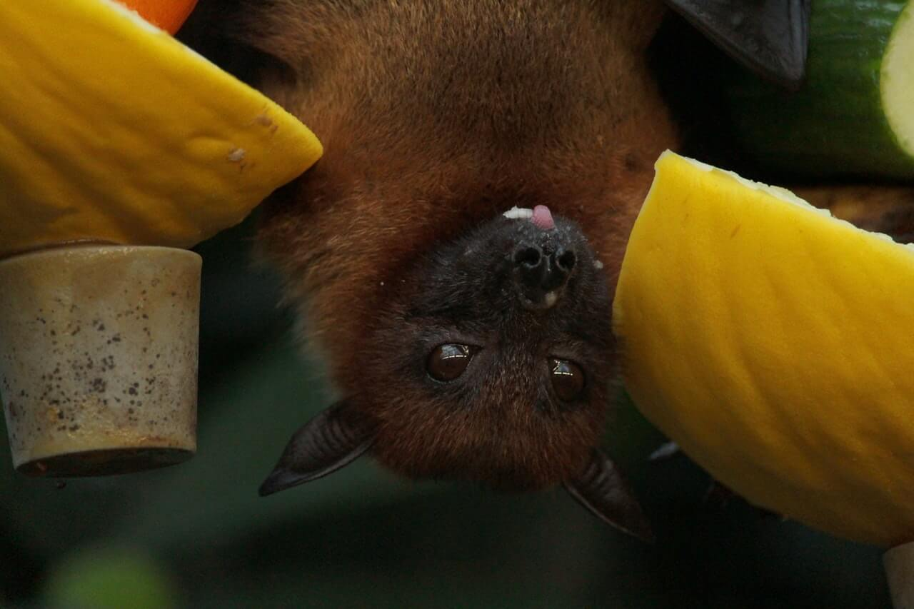 More coronaviruses looming large, warns China's 'bat woman'