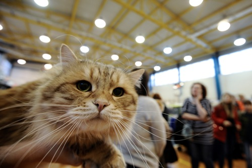 Two pet cats in New York test positive for COVID-19  ?