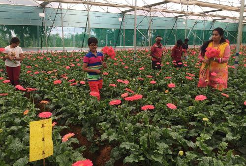 https://www.theweekendleader.com/admin/upload/dec9-16-flowerfmlharvest.jpg