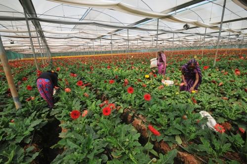 https://www.theweekendleader.com/admin/upload/dec9-16-flowerworkers.jpg