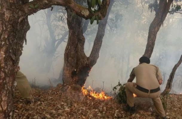 Forest fires ravage 3,000 hectares in Himachal