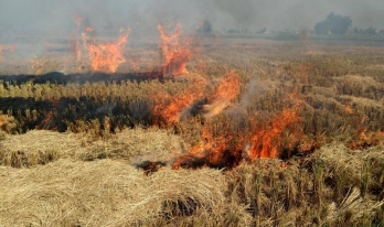 ?Stubble to be converted into biofuel; step to reduce pollution