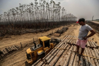 Deforestation in Brazilian Amazon grows by 34.5%