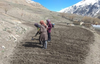 Potatoes growing at high altitude in Himachal to get global attention