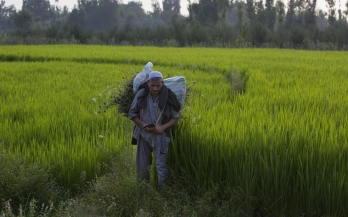 Amid pandemic and farmers' protest, Rabi acreage rises by nearly 5%