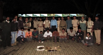 Pangolin trading racket busted in Karnataka's Chikkamagaluru, 10 held